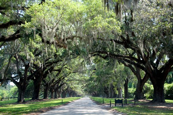 movie locations discovery the notebook 2004 - Cypress Gardens Nursing Home